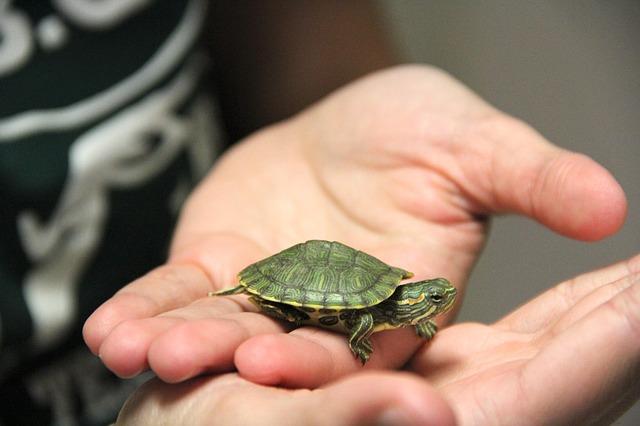 turtle-823295_640